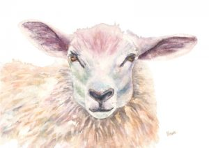 Wolly Eyes Sheep Original Art Painting by Helen Lowe of Quin Art Shop