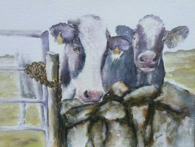 Frisian, cow, locked in. painting