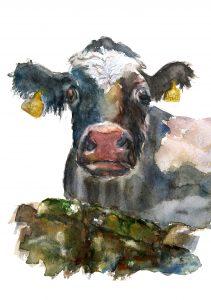 Irish Frisian Cow