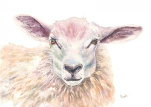 animal, sheep, painting, woolly.