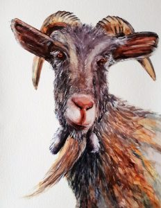 painting, goat.