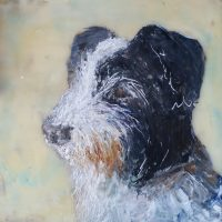 pet portrait, black and white, terrier dog.