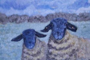 Suffock Brown Sheep