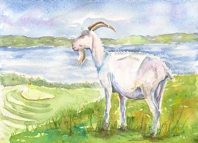 lahinch golf goat